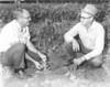 1969 May hail damaged tobacco