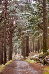 Woodland Path, Glendalough -IMG_3529