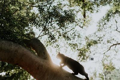 孕婦寫真 by平方樹攝影 ▶   https://www.square-o-tree.com/Couples     Facebook 粉絲專頁 ▶    https://www.facebook.com/square.o.tree