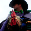 Courir capitaine Wade Berzas holds a chicken before releasing it for participants to chase in the Courir de Mardi Gras à Grand Mamou in Mamou, LA, Tuesday, March 4, 2014. Participants continue the tradition of chasing chickens and traveling to local homes to gather ingredients for a community gumbo. Paul Kieu, The Advertiser