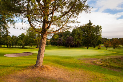 8th green and tree