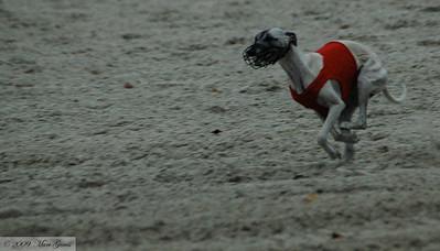 Rood: Delirious Fanthom Flo (Oortwijn/Brom) Wit: Ugge Ugge van de Oogstlaan