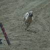 Moonlake Must Be Cool (Frosty) onder wit, Ellias Del Karfo, een hond van Karel Ravers onder rood