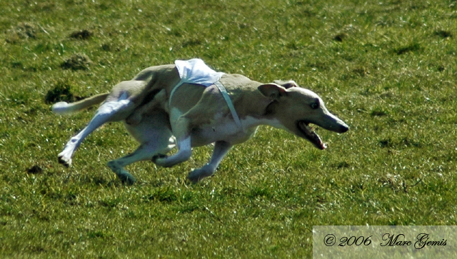 """Moonlake Making Sure """"Bowie"""" during his first run. Improved image after comments on dpreview."""