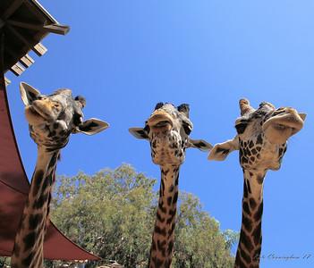 Courtney Kiest and Kylie Spillane With Friends  _ San Diego Zoo