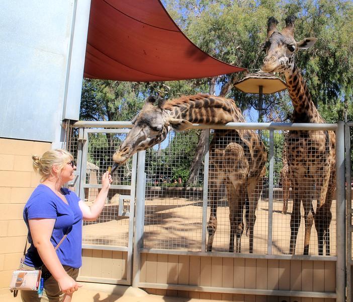 IMG_0179_SD Zoo_CKS_Giraffes 8.10.17.jpg
