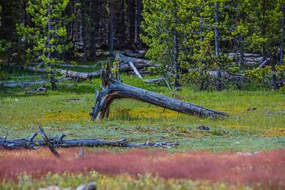 Yellowstone-NP-253