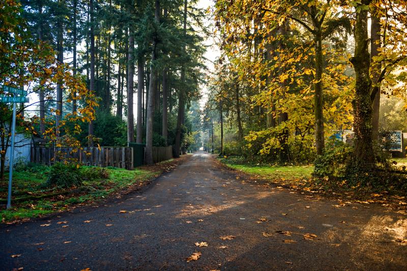 Neighborhood Walk, Nov 6, 2015