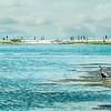 NIK egret--3 (Large)