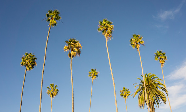 Laguna Beach Palms Tower Overhead.