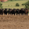 Heifer Group_0026*