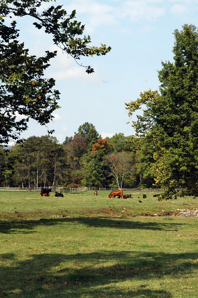 TMCK_0198 _cattle framed with trees Oct 2012