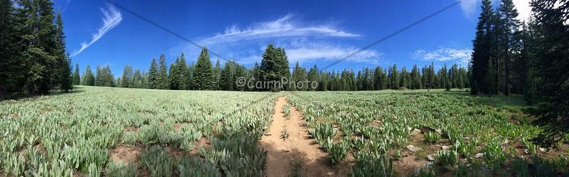 Mule Ear field