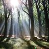 Solens stråler lyser gennem gennem trætoppene og rammer skovbunden, Rebild Bakker, Rebild. Dato: 10.10.10