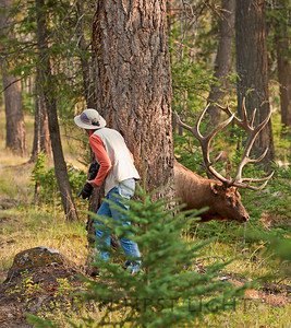 Jasper National Park, Canada, dancing with a bull elk