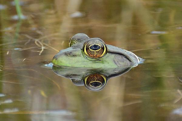 Under the watchful eye....