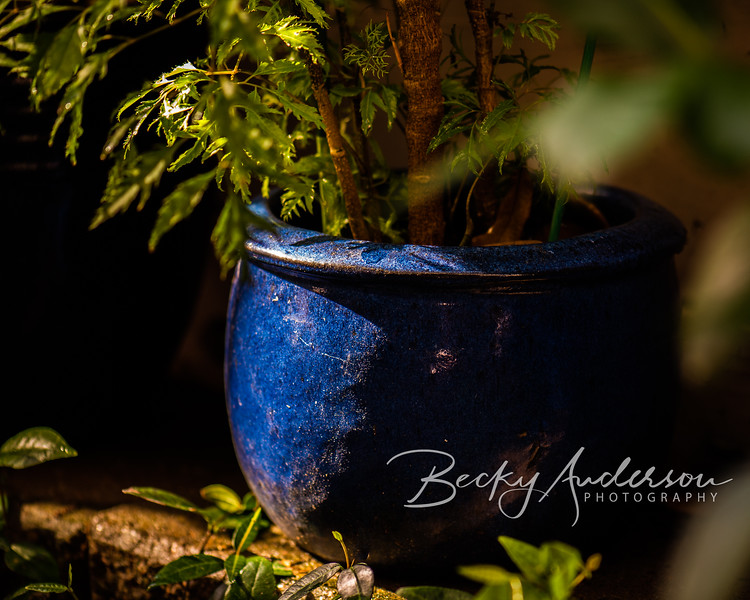 Blue-BAnderson