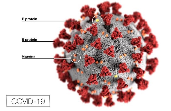 A colorful 3D rendering of a spiky fuzzball has spread around the world at least as fast as the coronavirus. The image, used by news media around the world, was created by Alissa Eckert, a medical illustrator at the U.S. Centers for Disease Control and Prevention (CDC), along with her colleague Dan Higgins.  https://elemental.medium.com/what-the-coronavirus-image-youve-seen-a-million-times-really-shows-3d8de7e3eb1f