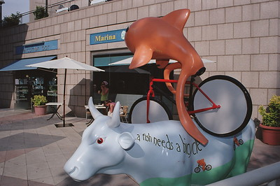 A cow needs a bull like a fish needs a bycicle_5