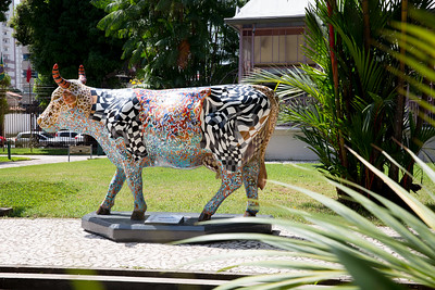 17 A vaca que vagueia_Geraldo Teixeira (3)