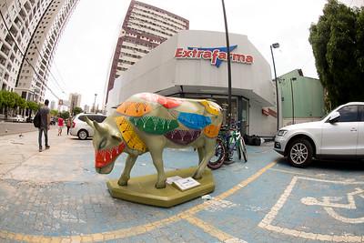 13 Vaca Enredada_Erivaldo Jr (2)