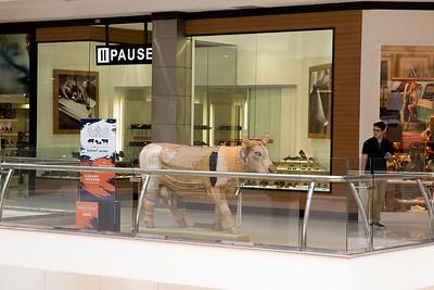 11 Vaca Estradeira_Emanuel Franco (1)