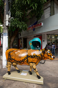 10 Vaca Faceira_Elieni Tenório (2)