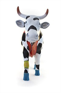 Fitness Cow - BUCH25029 - 05