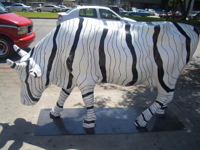 vaca zebra