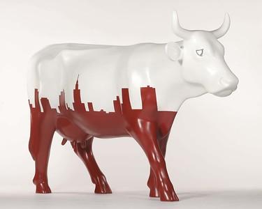 Krowa Rasy Warszawskiej - 39