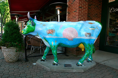 MAX's Ocean Cow Motion - A - WH008