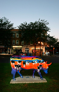 Cool Cow - C - WH024