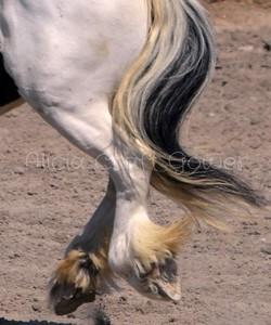 Equine Ballerina