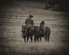 Yolo_Land_&_Cattle_1-5-13January_04,_2013IMG_4419untitled-2