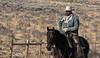 Draggin Y Cattle Company-5600