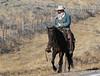 Draggin Y Cattle Company--3