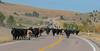 Draggin Y Cattle Company-5468
