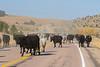 Draggin Y Cattle Company-5662