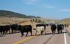 Draggin Y Cattle Company-4035