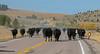 Draggin Y Cattle Company-5485