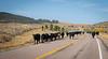 Draggin Y Cattle Company-3983
