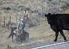 Draggin Y Cattle Company-5586