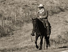 Draggin Y Cattle Company--2
