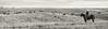 11-23 Yolo Land & Cattle_N5A0013-Edit-Edit