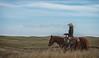 11-23 Yolo Land & CattleIMG_8363-Edit