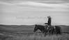 11-23 Yolo Land & CattleIMG_8363-Edit-Edit