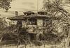 11-23 Yolo Land & Cattle_N5A9941-Edit-Edit