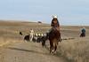 11-23 Yolo Land & CattleIMG_8403