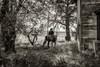 11-23 Yolo Land & Cattle_N5A0003-Edit-Edit