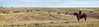 11-23 Yolo Land & Cattle_N5A0013-Edit
